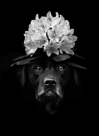 Black And White Flower Lab